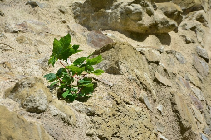 Plant on Rock